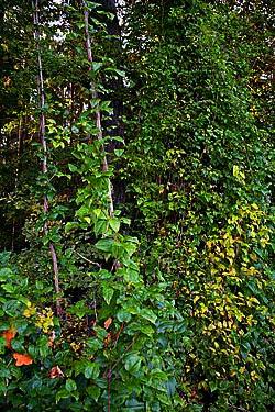 beweise die vielfältigkeit von pflanzen