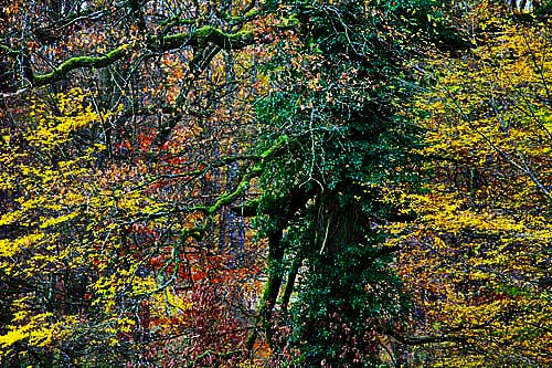 Herbst Feuerwerk Der Farben